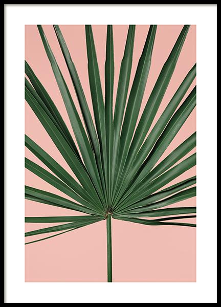 Pink Palm Leaf  Poster