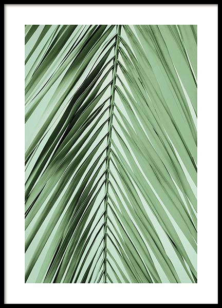 Parlour Palm Leaf Poster
