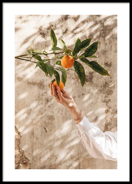 Picking Oranges Poster