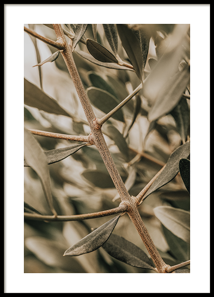 Detailed Olive Branch Poster