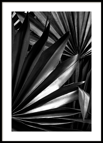 Luxurious Palm Poster