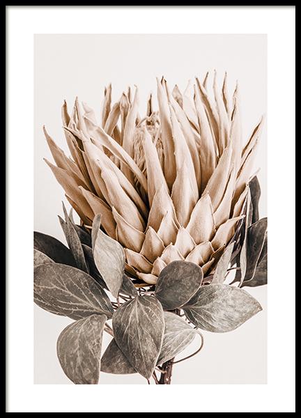 Protea No1 Poster