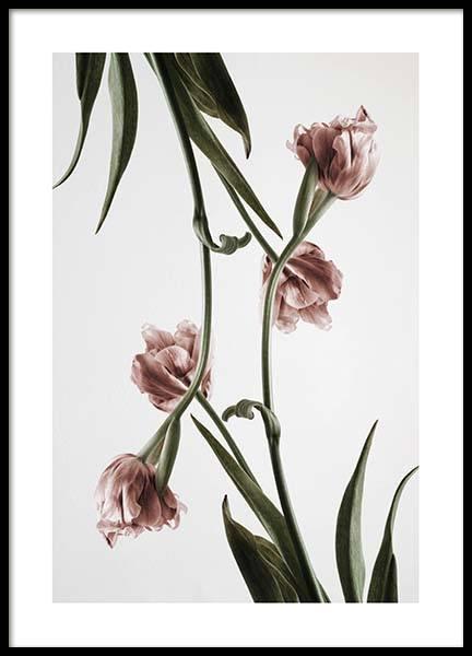 Pink Tulipe No2 Poster