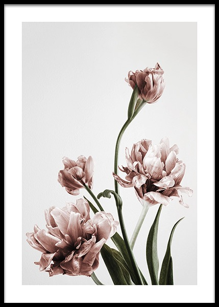 Pink Tulipe No3 (21x30) in the group Posters & Prints / Botanical at Desenio AB (2121-4)