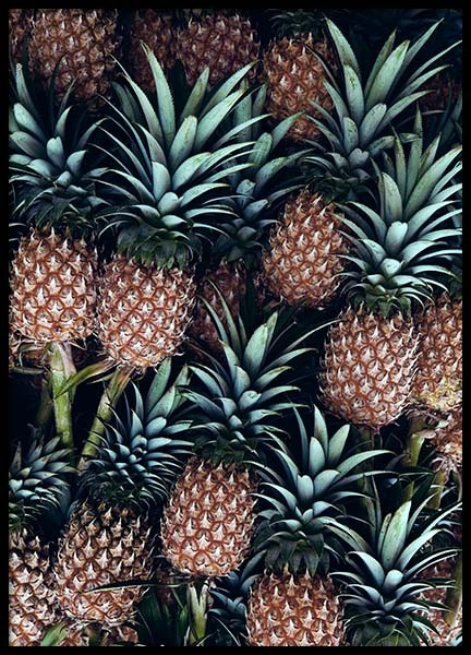Pineapple Fruits Poster in the group Posters & Prints / Kitchen at Desenio AB (2125)