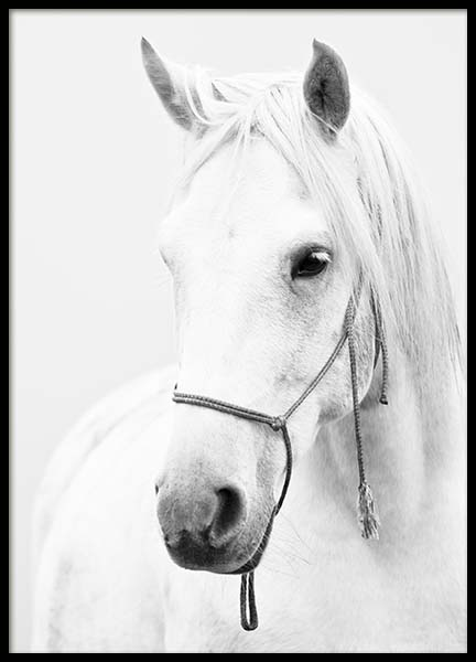 White Horse  Poster in the group Posters & Prints / Insects & animals at Desenio AB (2218)
