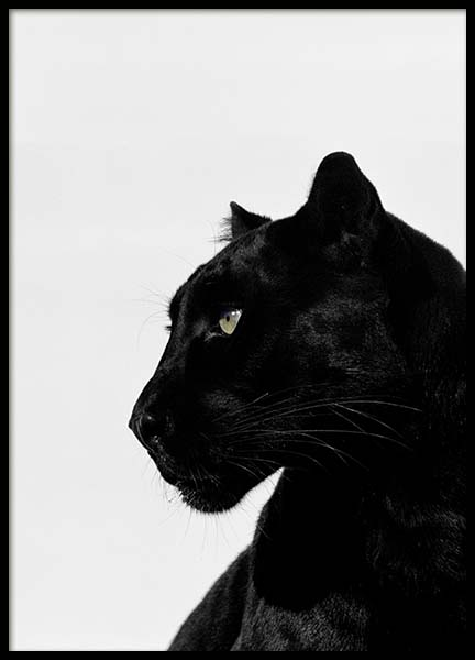 Black Panther Poster in the group Posters & Prints / Insects & animals at Desenio AB (2273)