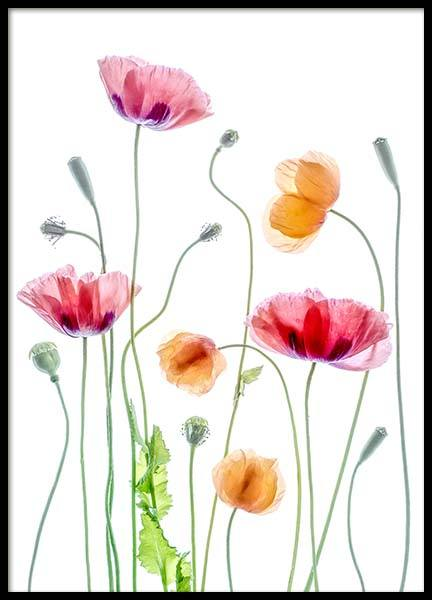 Poppies 1 Poster in the group Posters & Prints / Photography at Desenio AB (2323)