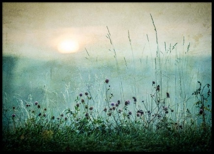 Meadow In Dawn Poster in the group Posters & Prints / Nature at Desenio AB (2327)