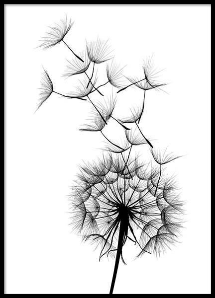 Dandelion No2 Poster in the group Posters & Prints / Black & white at Desenio AB (2393)