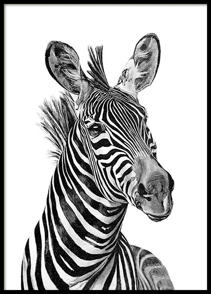 Zebra Black And White Poster in the group Posters & Prints / Kids posters at Desenio AB (2400)