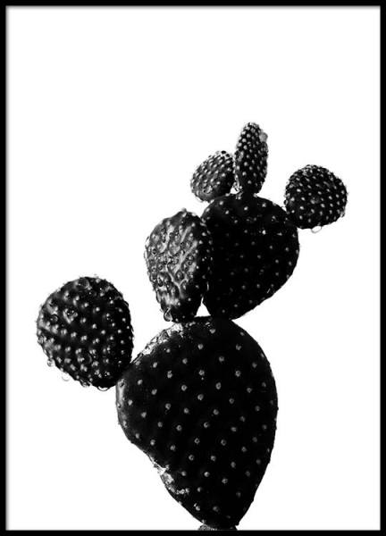 Black Cactus Two Poster in the group Posters & Prints / Black & white at Desenio AB (2430)