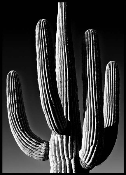 Dark Cactus Poster in the group Posters & Prints / Black & white at Desenio AB (2432)