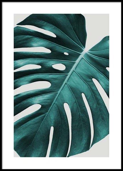 Monstera plant Poster in the group Posters & Prints / Sizes / 50x70cm | 20x28