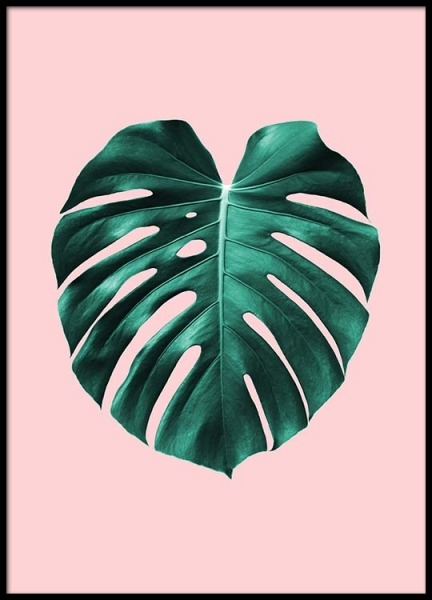 Monstera on pink Poster in the group Posters & Prints / Sizes / 50x70cm | 20x28