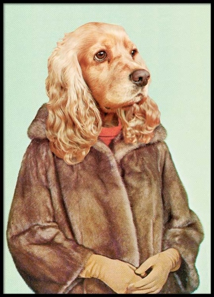 Lady Dog Poster in the group Posters & Prints / Insects & animals at Desenio AB (2442)