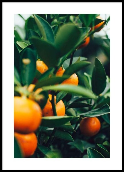 Orange Tree One Poster in the group Posters & Prints / Botanical at Desenio AB (2469)