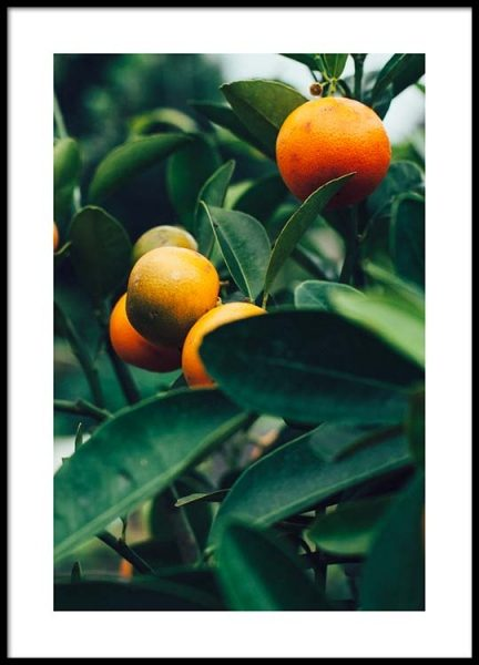 Orange Tree Two Poster in the group Posters & Prints / Photography at Desenio AB (2470)