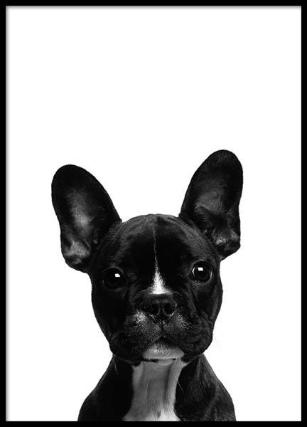 Frenchie Poster in the group Posters & Prints / Kids posters at Desenio AB (2570)