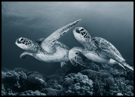 Turtle Love Poster in the group Posters & Prints / Photography at Desenio AB (2671)