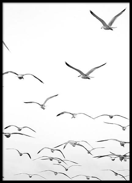 Freedom Poster in the group Posters & Prints / Black & white at Desenio AB (2679)
