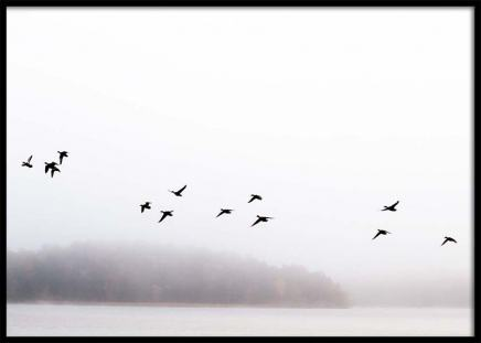 Birds Over Lake Poster