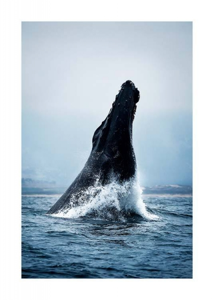 Humpback Jump Poster in the group Posters & Prints / Photography at Desenio AB (2728)