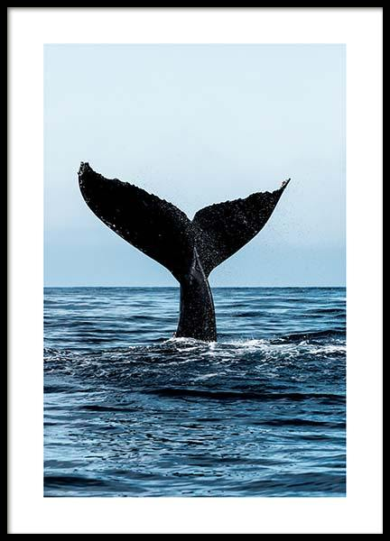 Humpback Tale Poster in the group Posters & Prints / Insects & animals at Desenio AB (2729)