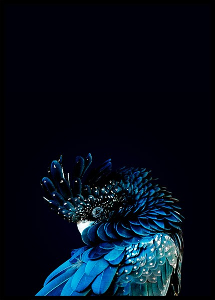 Blue Cockatoo Poster in the group Posters & Prints / Photography at Desenio AB (2730)