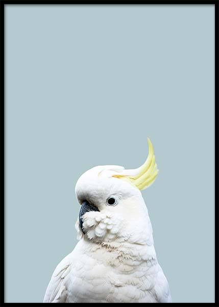 White Cockatoo Poster in the group Posters & Prints / Photography at Desenio AB (2731)