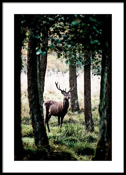 Stag In Forest Poster in the group Posters & Prints / Nature at Desenio AB (2743)