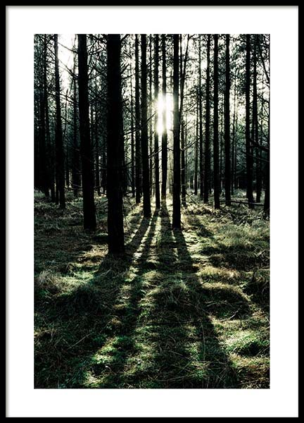 Sunlight In Forest Poster in the group Posters & Prints / Nature at Desenio AB (2744)
