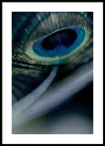 Peacock Feather Close Up Poster in the group Posters & Prints / Photography at Desenio AB (2860)