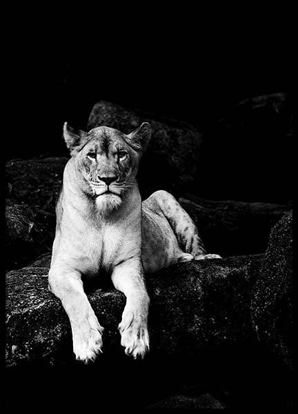 Lioness B&W Poster in the group Posters & Prints / Black & white at Desenio AB (2908)
