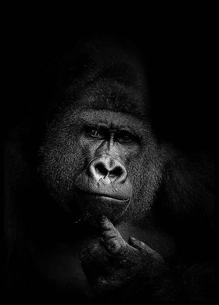 Gorilla B&W Poster in the group Posters & Prints / Black & white at Desenio AB (2910)
