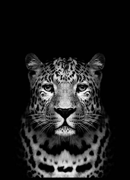 Leopard B&W Poster in the group Posters & Prints / Black & white at Desenio AB (2912)