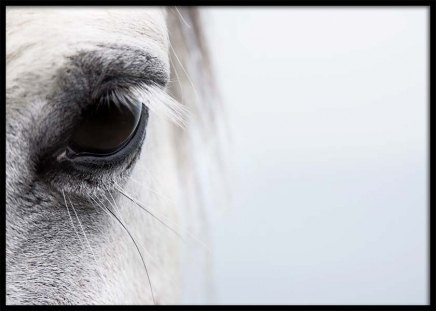 White Horse Close Up Poster in the group Posters & Prints / Photography at Desenio AB (2915)
