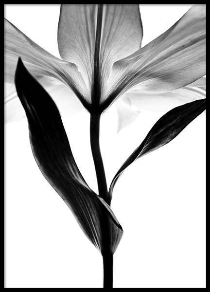 Lily Monochrome Two Poster in the group Posters & Prints / Black & white at Desenio AB (2937)