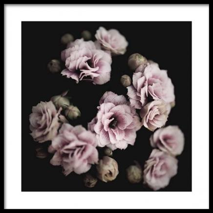 Pastel Roses Poster in the group Posters & Prints / Photography at Desenio AB (2938)