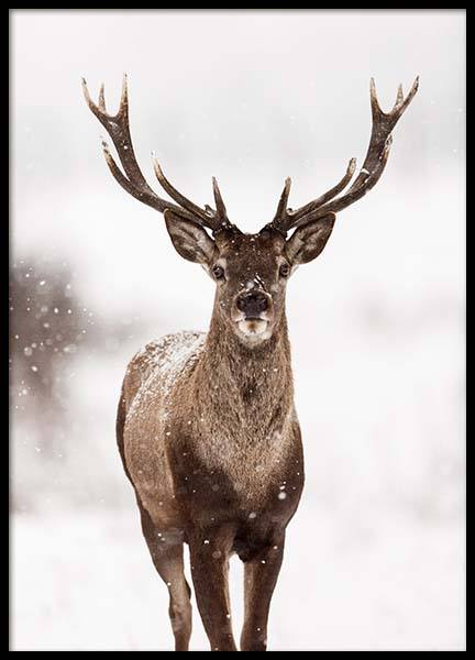Deer Winter Landscape Poster in the group Posters & Prints / Photography at Desenio AB (2949)