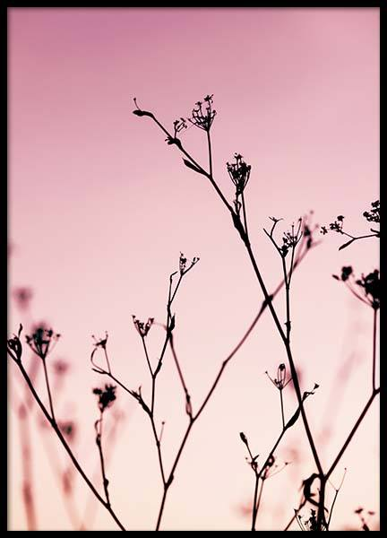 Plants At Pink Sunset Poster in the group Posters & Prints / Nature at Desenio AB (2967)