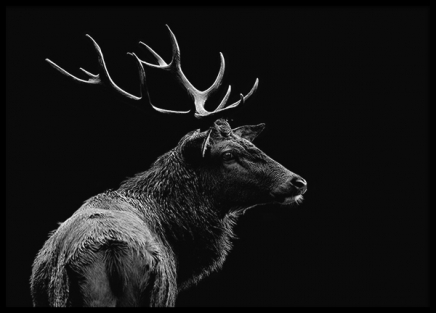 Deer Black Poster in the group Posters & Prints / Black & white at Desenio AB (3135)