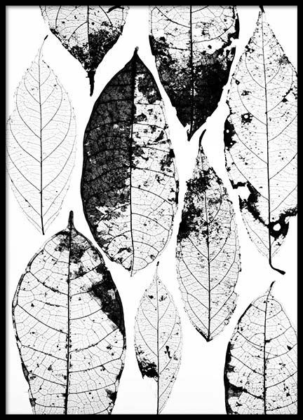 Leaf Skeletons No1 Poster in the group Posters & Prints / Botanical at Desenio AB (3157)