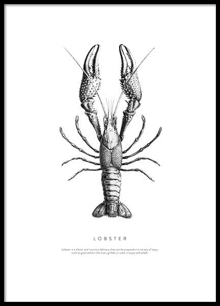 Lobster No1 Poster in the group Posters & Prints / Black & white at Desenio AB (3161)