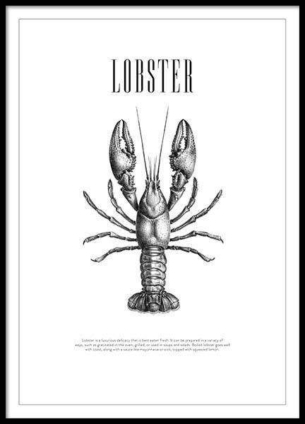 Lobster No2 Poster in the group Posters & Prints / Black & white at Desenio AB (3162)