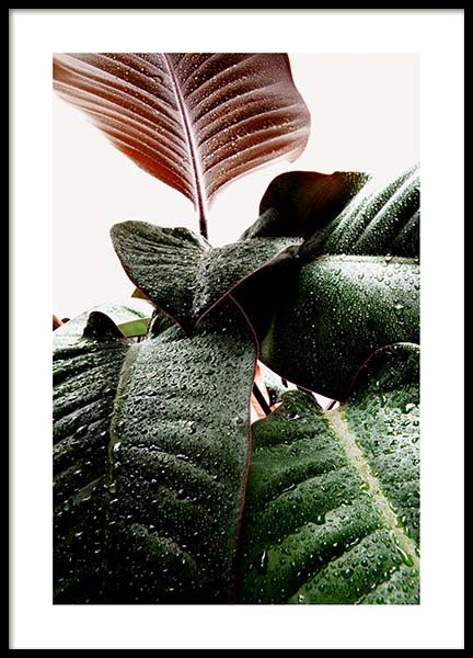 Wet Rubber Leaf One Poster in the group Posters & Prints / Photography at Desenio AB (3335)