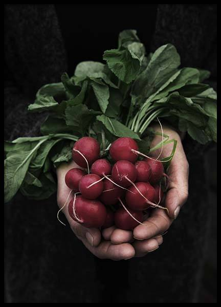 Radish Poster in the group Posters & Prints / Kitchen at Desenio AB (3488)