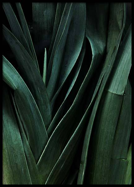 Leek Close Up Poster in the group Posters & Prints / Kitchen at Desenio AB (3490)