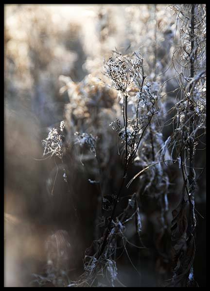 Frosty Meadow Poster in the group Posters & Prints / Photography at Desenio AB (3495)