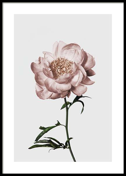 Peony No1 Poster in the group Posters & Prints / Photography at Desenio AB (3505)